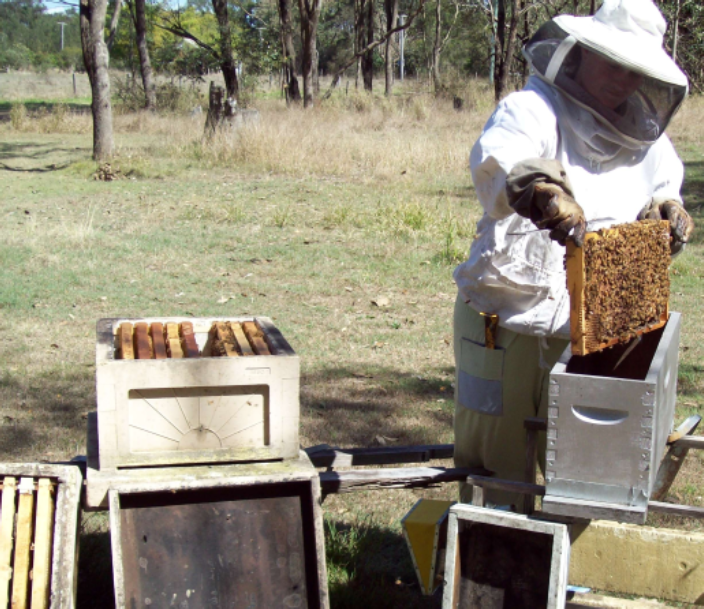 Brisbane Amateur Beekeepers' Society Inc  - How to Create a Nuc